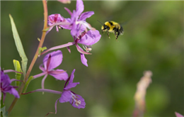 Bumble bees can experience an object using one sense and later recognize it using another